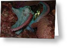 Octopus On Night Dive Greeting Card