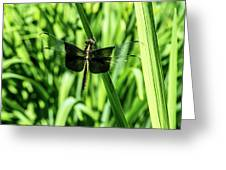 Odanate With Wings Spread Greeting Card
