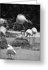 Odd Bird Out In Black And White Greeting Card