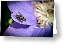 Odd Fly On Clematis Greeting Card