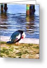 Odd Looking Duck In Swansboro Nc Greeting Card