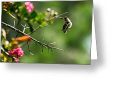 Odd Pose - Hummingbird Greeting Card