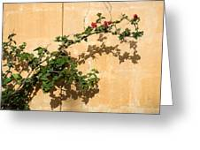 Of Light And Shadow - Bougainvillea On A Timeworn Plaster Wall Greeting Card