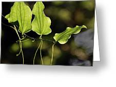 Of Veins And Tendrils Greeting Card