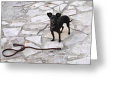 Off The Leash Greeting Card