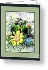 Off Yellows Greeting Card