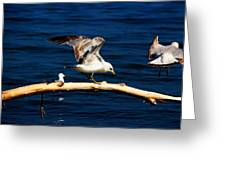Off You Gull Greeting Card