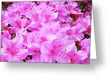 Office Art Azalea Flowers Botanical 31 Azaleas Giclee Art Prints Baslee Troutman Greeting Card