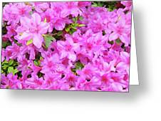 Office Art Azaleas Flower Art Prints 1 Azalea Flowers Giclee Baslee Troutman Greeting Card