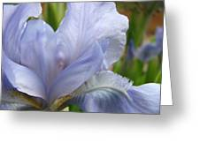 Office Art Blue Iris Flower Floral Giclee Baslee Troutman Greeting Card