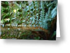 Office Art Fern Green Forest Ferns Giclee Prints Baslee Troutman Greeting Card