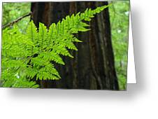 Office Art Ferns Art Redwood Tree Forest Fern Giclee Prints Baslee Troutman Greeting Card