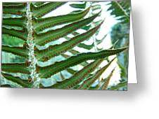Office Art Ferns Green Forest Fern Giclee Prints Baslee Troutman Greeting Card