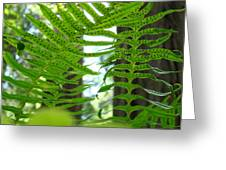 Office Art Ferns Redwood Forest Fern Giclee Prints Baslee Troutman Greeting Card