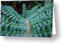 Office Art Forest Ferns Green Fern Giclee Prints Baslee Troutman Greeting Card
