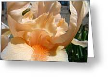 Office Art Irises Flower Orange Iris Flower Giclee Art Prints Baslee Troutman Greeting Card