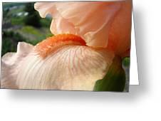 Office Art Irises Orange Iris Flowers 9 Giclee Prints Corporate Art Baslee Troutman Greeting Card