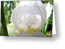 Office Art Irises White Iris Flower Floral Giclee Prints Baslee Troutman Greeting Card