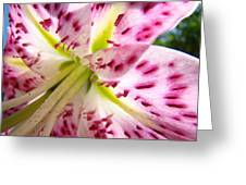 Office Art Lily Flower Giclee Prints Pink Lilies Baslee Troutman Greeting Card