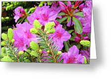 Office Art Pine Conifer Pink Azalea Flowers 38 Azaleas Giclee Art Prints Baslee Troutman Greeting Card