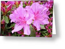 Office Art Pink Azalea Flower Garden 3 Giclee Art Prints Baslee Troutman Greeting Card