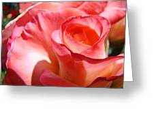 Office Art Pink Rose Spiral Roses Giclee Prints Baslee Troutman Greeting Card