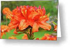 Office Art Prints Azaleas Botanical Landscape 11 Giclee Prints Baslee Troutman Greeting Card