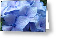 Office Art Prints Blue Hydrangea Flowers Giclee Baslee Troutman Greeting Card
