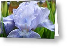 Office Art Prints Blue Iris Flower Giclee Prints Baslee Troutman Greeting Card