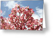 Office Art Prints Blue Sky Pink Dogwood Flowering 7 Giclee Prints Baslee Troutman Greeting Card