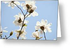 Office Art Prints Blue Sky White Magnolia Flowers 38 Giclee Prints Baslee Troutman Greeting Card