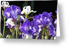 Office Art Prints Iris Flower Botanical Landscape 30 Giclee Prints Baslee Troutman Greeting Card