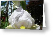 Office Art Prints Iris Flowers White Yellow Irises Baslee Troutman Greeting Card
