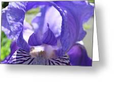 Office Art Prints Irises Purple Iris Flower Giclee Baslee Troutman Greeting Card