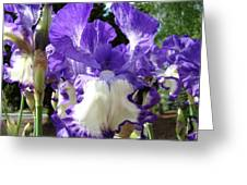 Office Art Prints Irises Purple White Iris Flowers 39 Giclee Prints Baslee Troutman Greeting Card