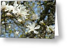 Office Art Prints Magnolia Tree Flowers Landscape 15 Giclee Prints Baslee Troutman Greeting Card