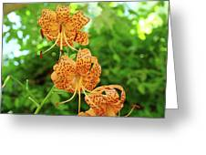 Office Art Prints Tiger Lilies Flowers Nature Giclee Prints Baslee Troutman Greeting Card