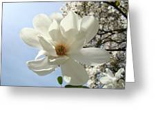 Office Art Prints White Magnolia Flower 66 Blue Sky Giclee Prints Baslee Troutman Greeting Card