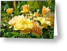 Office Art Rose Garden Giclee Prints Roses Baslee Troutman Greeting Card