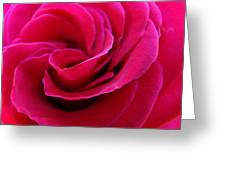 Office Art Rose Spiral Art Pink Roses Flowers Giclee Prints Baslee Troutman Greeting Card