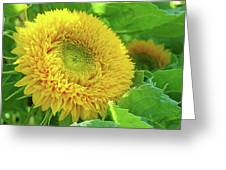 Office Art Sunflower Sun Flowers Giclee Baslee Troutman Greeting Card
