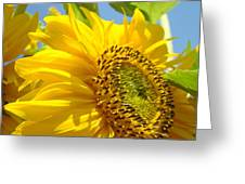 Office Art Sunflowers Giclee Art Prints Sun Flowers Baslee Troutman Greeting Card