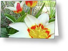 Office Art Tulips Tulip Flowers Giclee Art Prints Florals Baslee Troutman Greeting Card