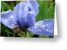 Office Art Wet Blue Iris Flower Floral Giclee Baslee Troutman Greeting Card