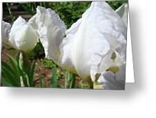 Office Art White Iris Flowers Giclee Art Prints Irises Baslee Troutman Greeting Card
