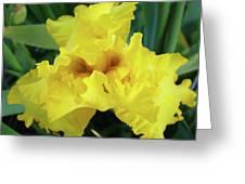 Office Art Yellow Iris Flower Irises Giclee Prints Baslee Troutman Greeting Card