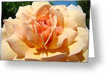 Office Artwork Roses Peach Rose Flower Giclee Baslee Troutman Greeting Card