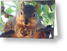 Oh Nuts Greeting Card