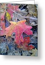 Autumn Color Greeting Card