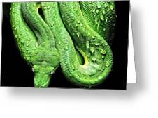 Oh So Green Viper Greeting Card